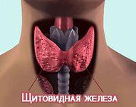 Лечение щитовидной железы народными средствами