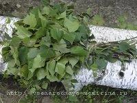 Березовые листья от судороги