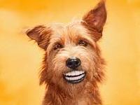 Как осветлить зубы в домашних условиях