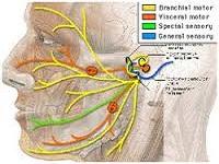 Лечение неврита лицевого нерва народными средствами