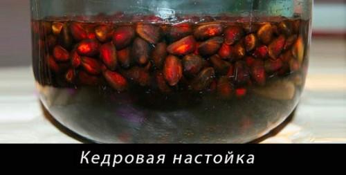 Свойства настойки кедровых орехов