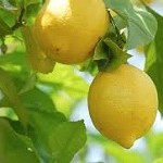 Лимон — польза и вред