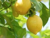 Какую пользу приносит лимон