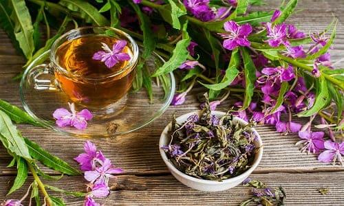 Польза и вред иван-чая