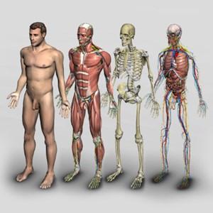 Что нужно знать о строении тела человека?